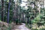 Cecilia Forest, Cape Town Nature, Cape Town