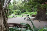 The Company garden, Cape Town Culture, Cape Town