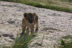 Vredenheim Lion and Game Park, Cape Town