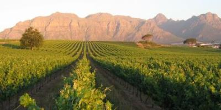 Kleine Zalze, Stellenbosch Wine Route, Cape Town