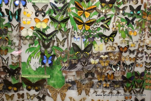 Butterfly Display at Butterfly World, Cape Town