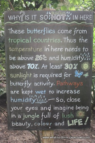 Butterfly World, Cape Town