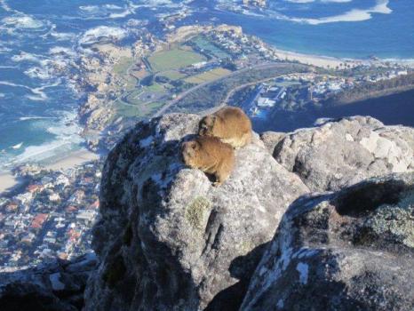 Cape Town Abseil