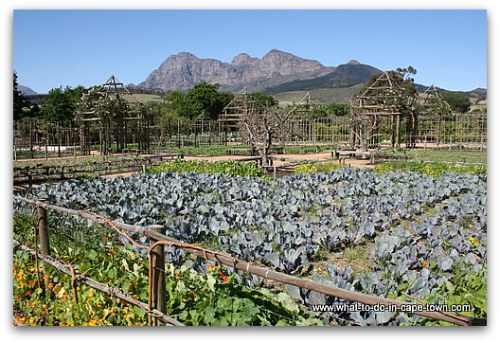 Edible Garden at Babylonstoren on the Paarl Wine Route