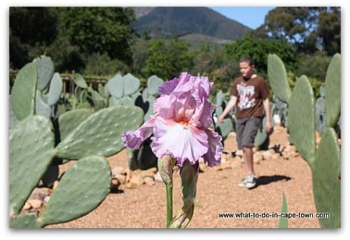 Edible Garden at Babylonstoren on the Paarl Wine Route