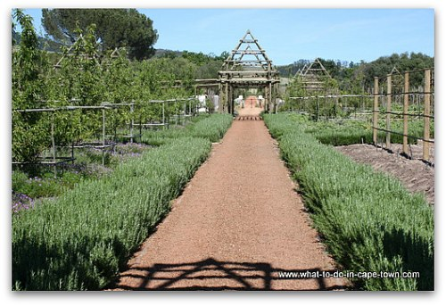 Babylonstoren, Franschhoek Wine Route, Cape Winelands