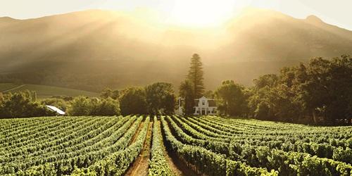 Buitenverwachting, Constantia Wine Route