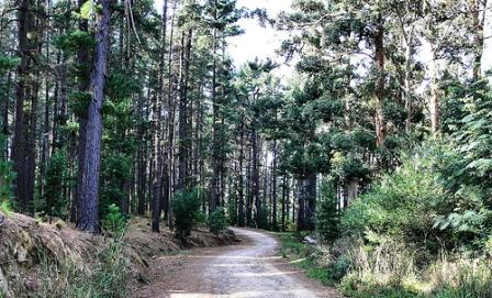 Cecilia Forest, Cape Town Nature, Cape Town