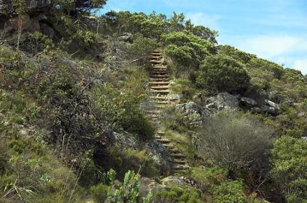 Cecilia Forest, Cape Town