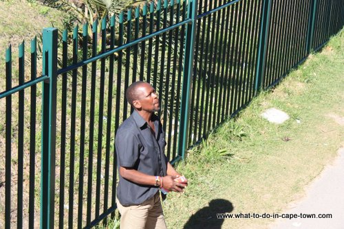 Day two in Cape Town - Imizamo Yethu Township Tour Guide