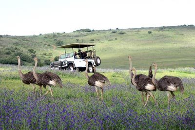 Game Drive at Clara Anna Fontein Private Game Reserve and Country Lodge