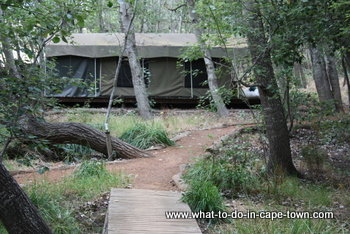 Tented Camp at Clara Anna Fontein Private Game Reserve and Country Lodge