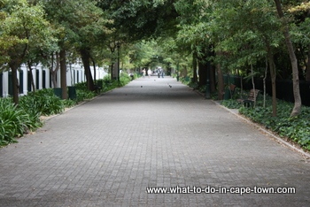 Government Avenue, Company Garden