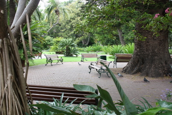 The Company Garden, Cape Town