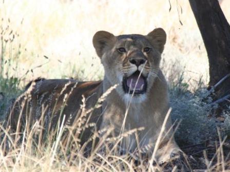Suzanna at Drakenstein Lion Park