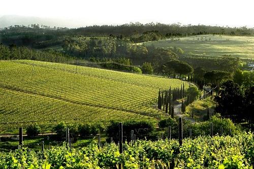 Paul Cluver Wines, Elgin Wine Route