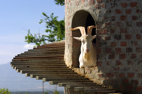 Goat Tower at Fairview Estate