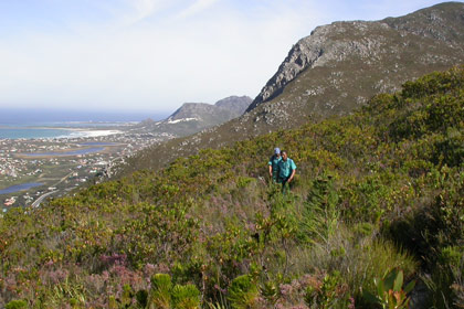 Fynbos Trail at Harold Porter National Botanical Garden
