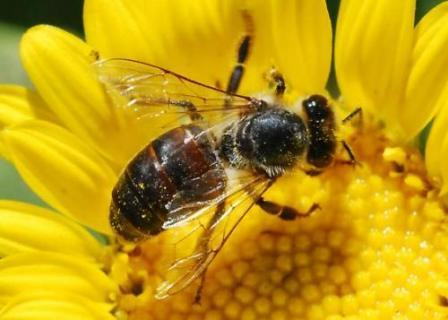 Honeybee Education Centre, Cape Town Kids, Cape Town
