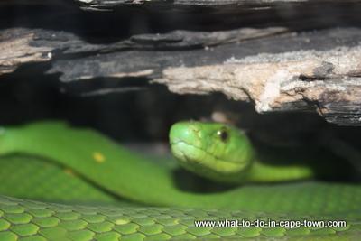 Imhoff Farm Snake Park