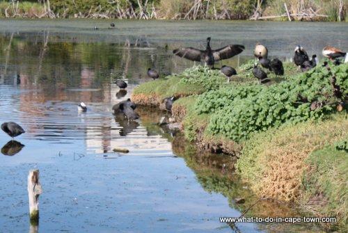 Intaka Island Bird Sanctuary