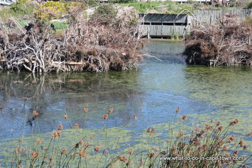 Man-made nesting islands at Intaka Island Bird Sanctuary