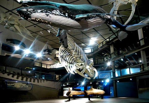 South African Museum, Cape Town Museums, Cape Town