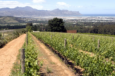 A view from the Merlot at Kings Kloof