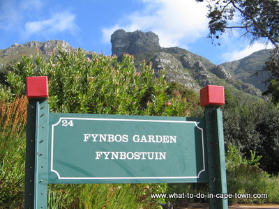 Day two in Cape Town - Kirstenbosch National Botanical Garden