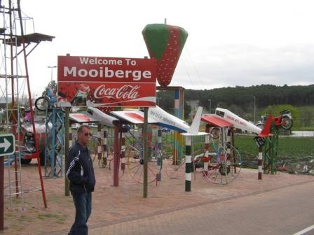 Fresh Strawberries - Where to pick them or buy them in Cape Town - Mooiberge Farmstall outside Stellenbosch.