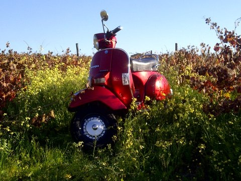 Fiero amongst the vines on the Stellenbosch Wine Route