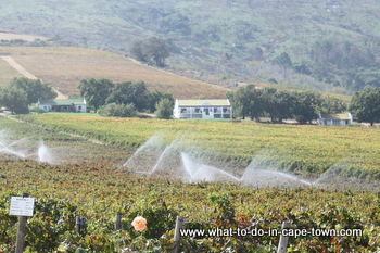 Accommodation, Seidelberg Wine Estate, Paarl Wine Route, Cape Town