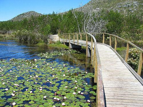 Silvermine Nature Reserve, Cape Town Nature, Cape town