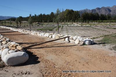 Dik Delta Fynbos Culinary Gardens at Solms Delta Wine Estate