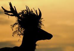 Royal headgear © Sam Rowley