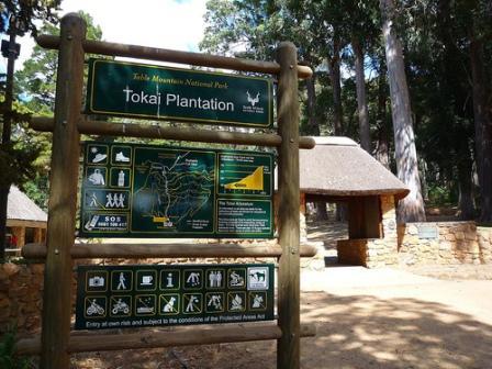 Tokai Forest Arboretum, Cape Town Nature, Cape town