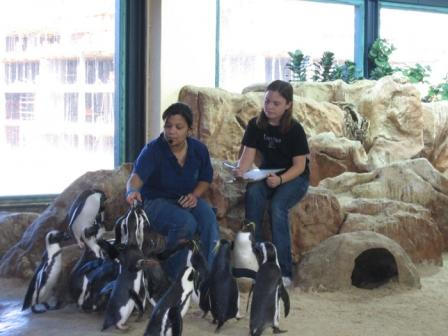 African Penguins at Two Oceans Aquarium, Cape Town