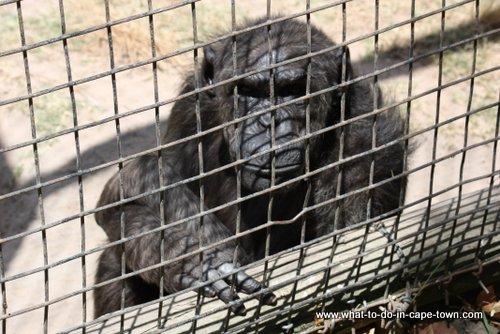 Tygerberg zoo, Cape Town Kids, Cape Town Animals, Cape Town