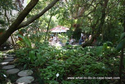 Cape Town Walks - US Botanical Garden