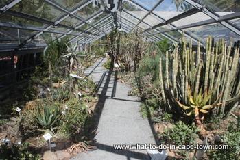 Hothouse at the US Botanical Garden, Stellenbosch
