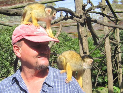 Squirrel Monkeys in the Monkey Jungle at The World of Birds, Cape Town