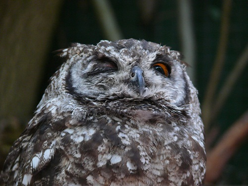 Owl at The World of Birds, Cape Town