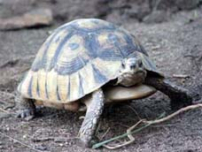Tortoise at The World of Birds, Cape Town