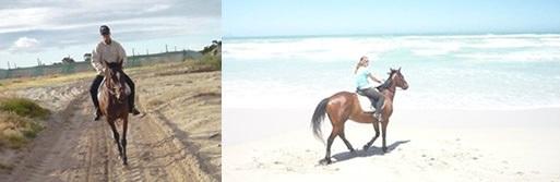 Cape Town Horse Riding Centres