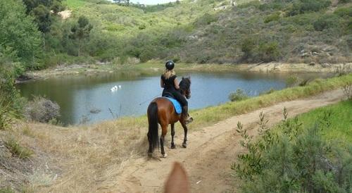Equanimity Equestrian Centre, Cape Town Horse Riding Centres