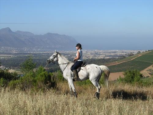 Journey's End, Cape Town Horse Riding Centres