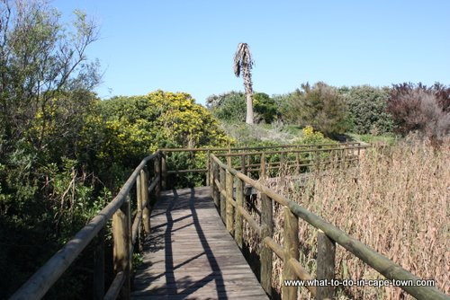 Cape Town Walks - Intaka Island