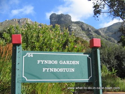 Kirstenbosch National Botanical Garden, Cape Town