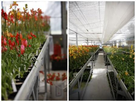 Disa greenhouse at La Motte Wine Estate, Franschhoek Wine Route