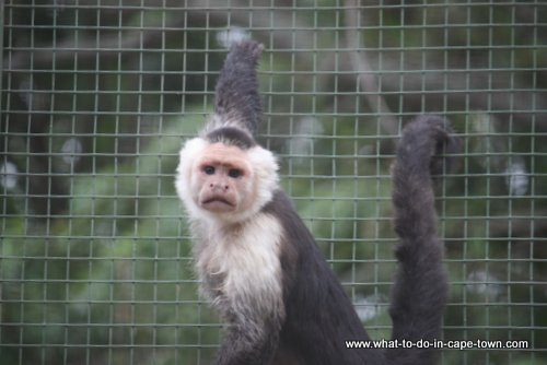 Monkey Town Somerset West, Cape Town Kids, Cape Town Animals, Cape Town